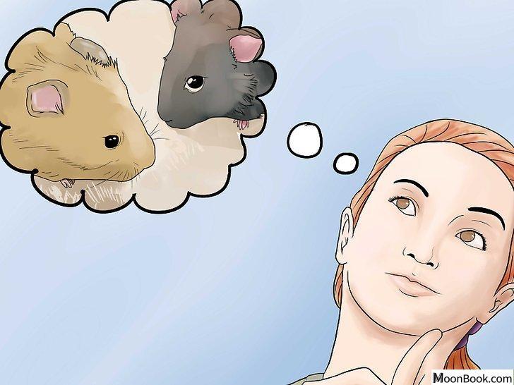 以Breed Hamsters Step 12为标题的图片