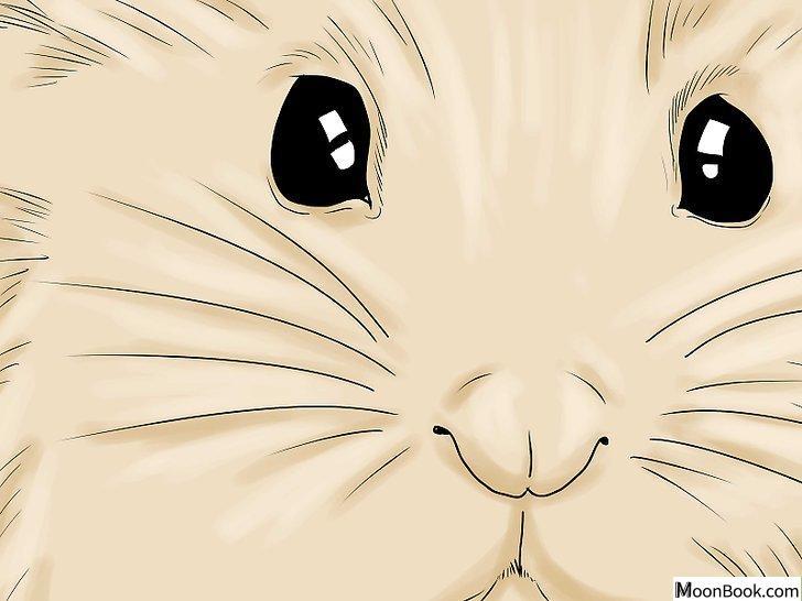 以Breed Hamsters Step 4为标题的图片