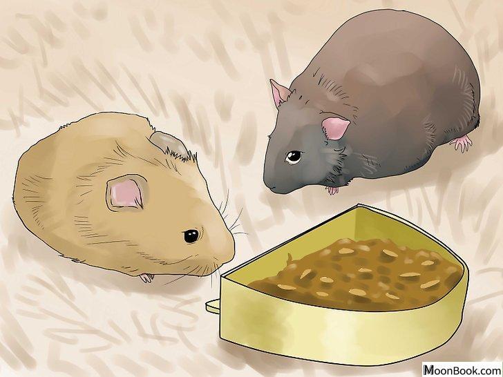 以Breed Hamsters Step 7为标题的图片