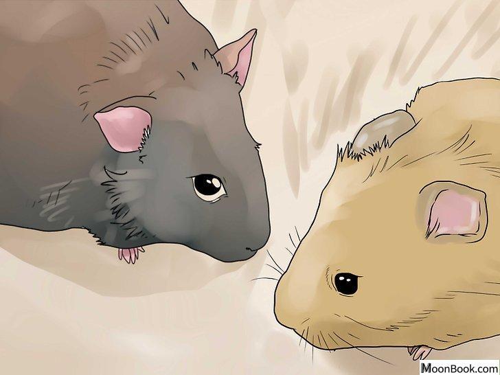 以Breed Hamsters Step 8为标题的图片