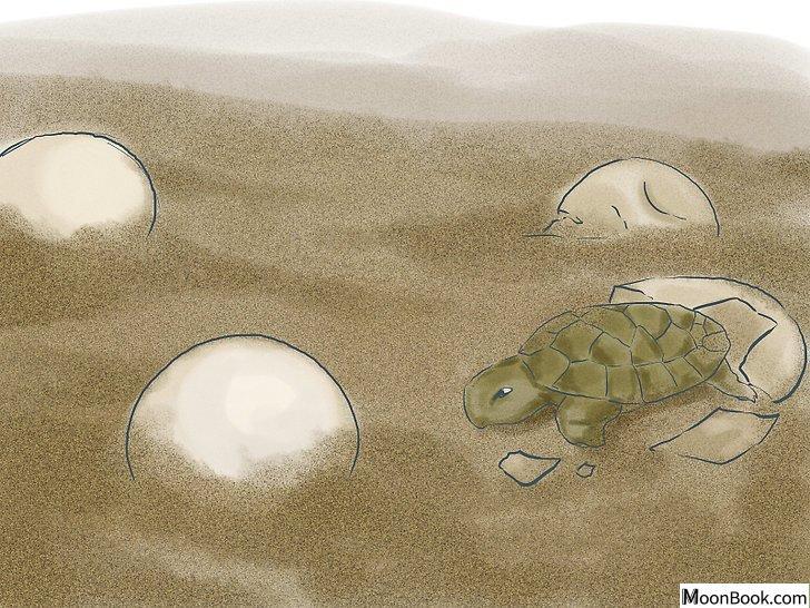 以Breed Turtles Step 17为标题的图片