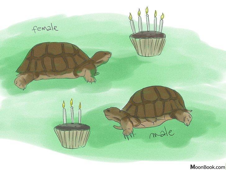 以Breed Turtles Step 2为标题的图片