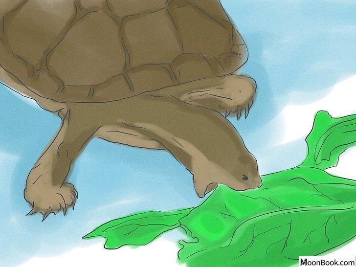 以Breed Turtles Step 4为标题的图片