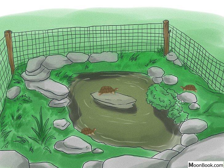 以Breed Turtles Step 5为标题的图片