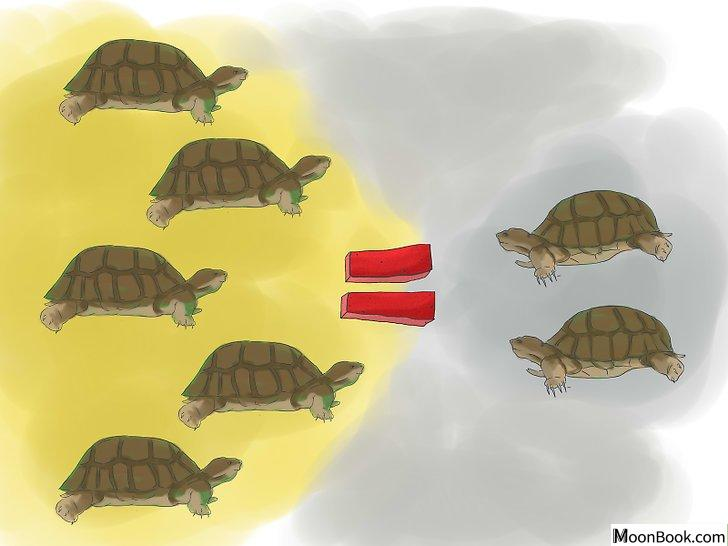 以Breed Turtles Step 6为标题的图片