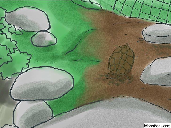 以Breed Turtles Step 7为标题的图片
