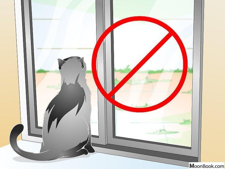 以Care for Your Cat After Neutering or Spaying Step 5为标题的图片