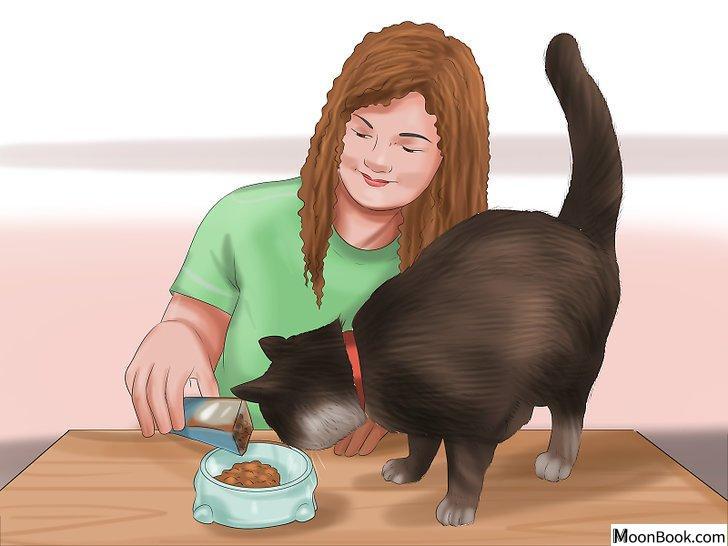 以Care for Your Cat Step 11为标题的图片