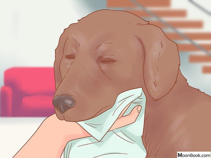 以Care for a Dog After It Has Just Vomited Step 3为标题的图片