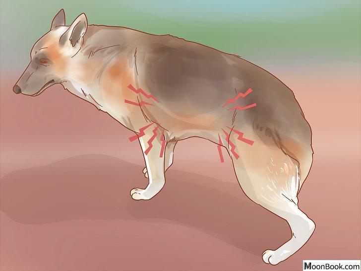 以Care for a Dog After It Has Just Vomited Step 5为标题的图片