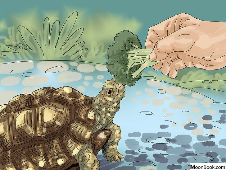 以Care for a Tortoise Step 4为标题的图片