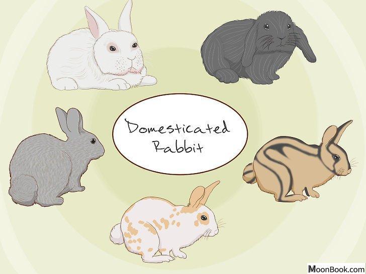 以Care for an Injured Rabbit Step 12为标题的图片