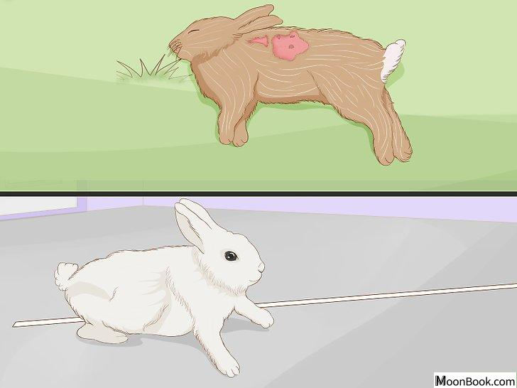以Care for an Injured Rabbit Step 13为标题的图片