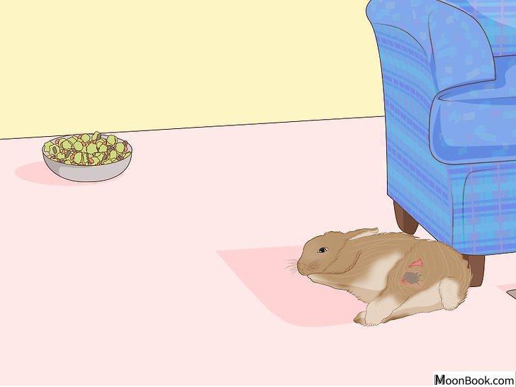 以Care for an Injured Rabbit Step 2为标题的图片
