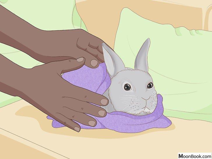 以Care for an Injured Rabbit Step 5为标题的图片