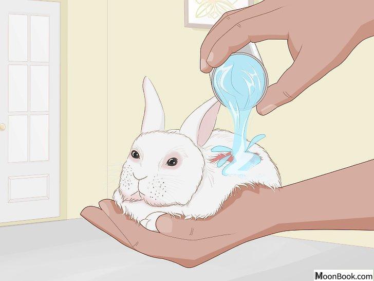 以Care for an Injured Rabbit Step 9为标题的图片