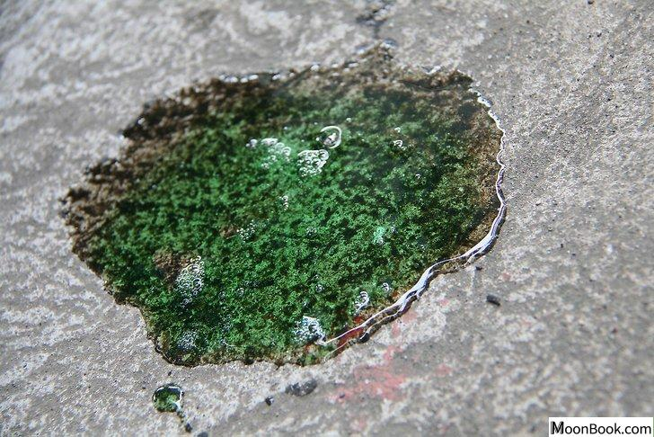 以Clean Oil Off a Driveway Step 13为标题的图片