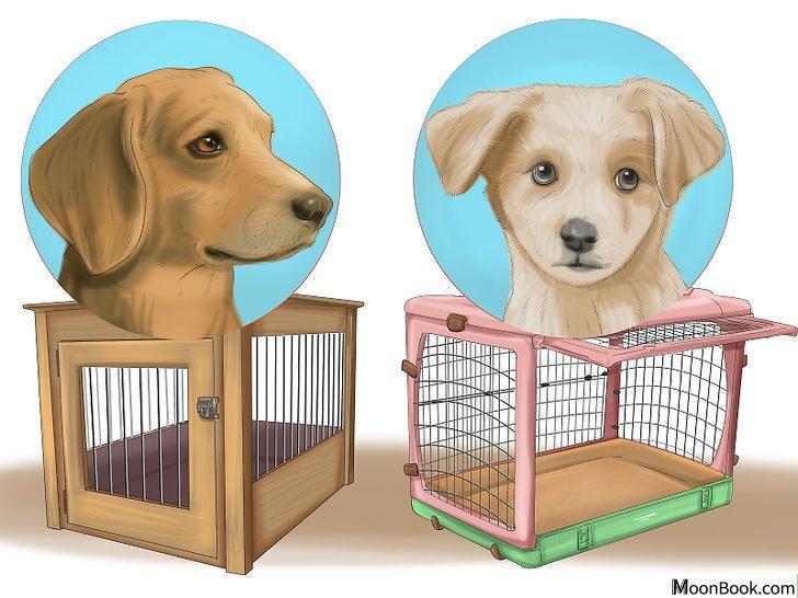 以Crate Train Your Dog or Puppy Step 1为标题的图片