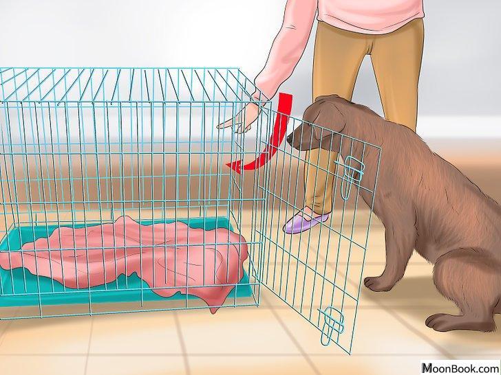 以Crate Train Your Dog or Puppy Step 10为标题的图片