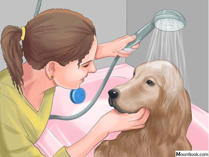 以Crate Train Your Dog or Puppy Step 13为标题的图片