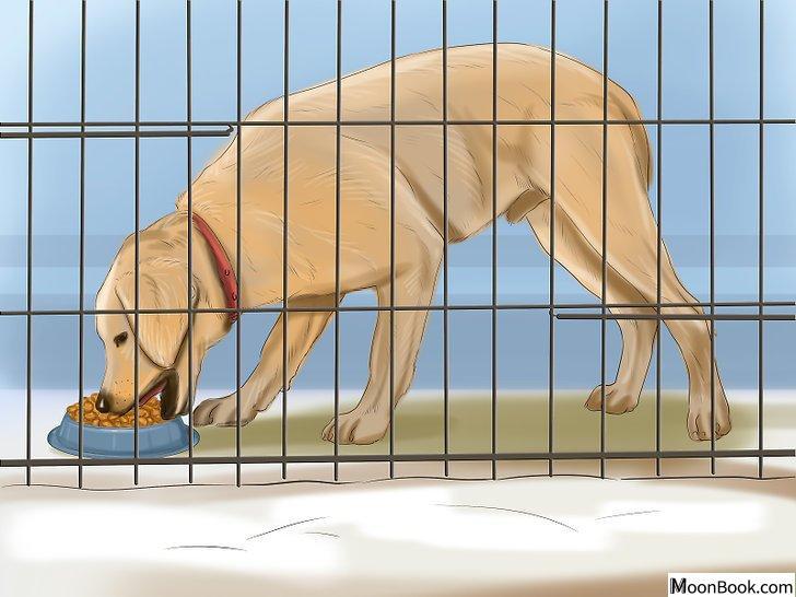 以Crate Train Your Dog or Puppy Step 15为标题的图片