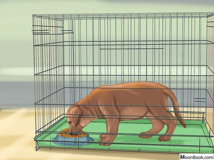 以Crate Train Your Dog or Puppy Step 16为标题的图片