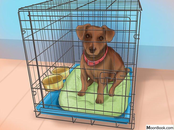 以Crate Train Your Dog or Puppy Step 17为标题的图片