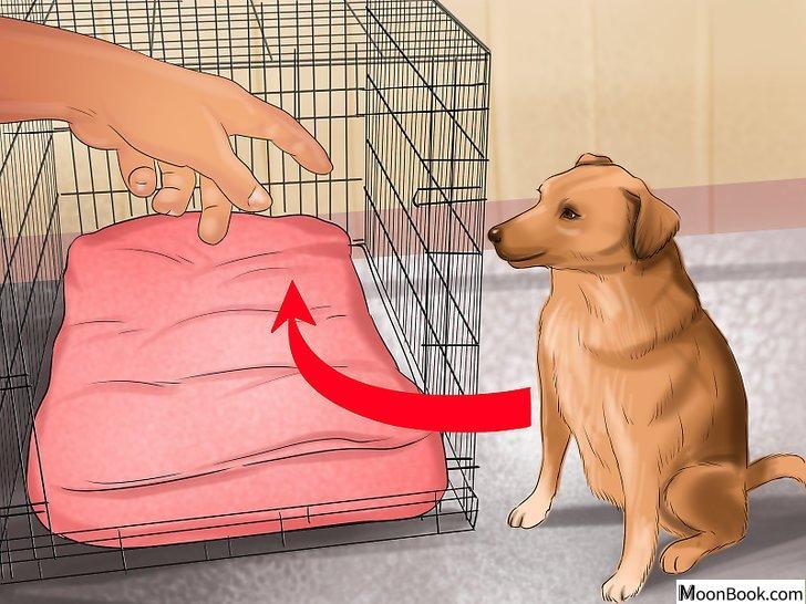以Crate Train Your Dog or Puppy Step 18为标题的图片