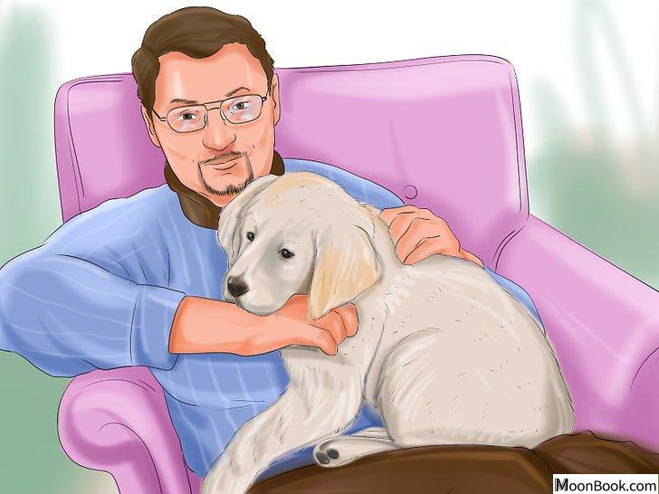 以Crate Train Your Dog or Puppy Step 19为标题的图片