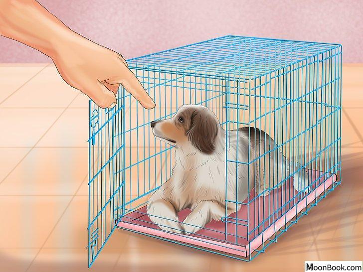 以Crate Train Your Dog or Puppy Step 20为标题的图片