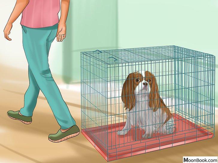 以Crate Train Your Dog or Puppy Step 22为标题的图片