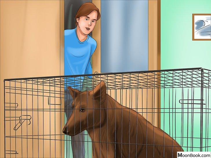 以Crate Train Your Dog or Puppy Step 25为标题的图片