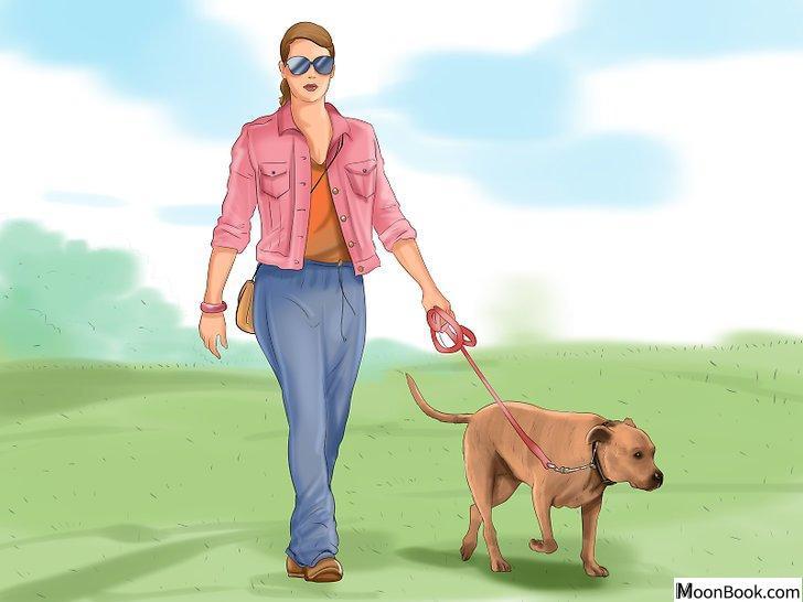 以Crate Train Your Dog or Puppy Step 26为标题的图片