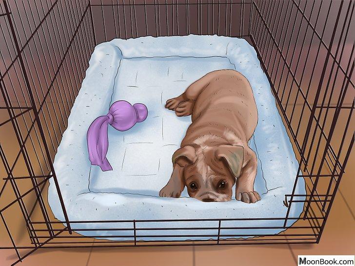 以Crate Train Your Dog or Puppy Step 28为标题的图片