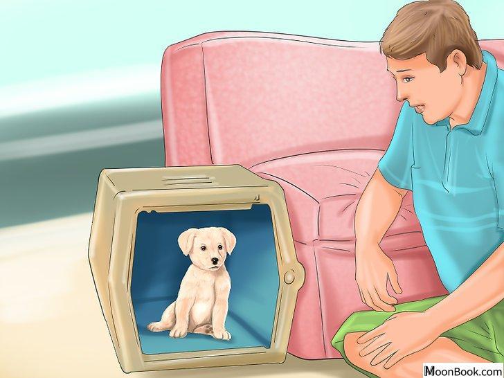 以Crate Train Your Dog or Puppy Step 29为标题的图片