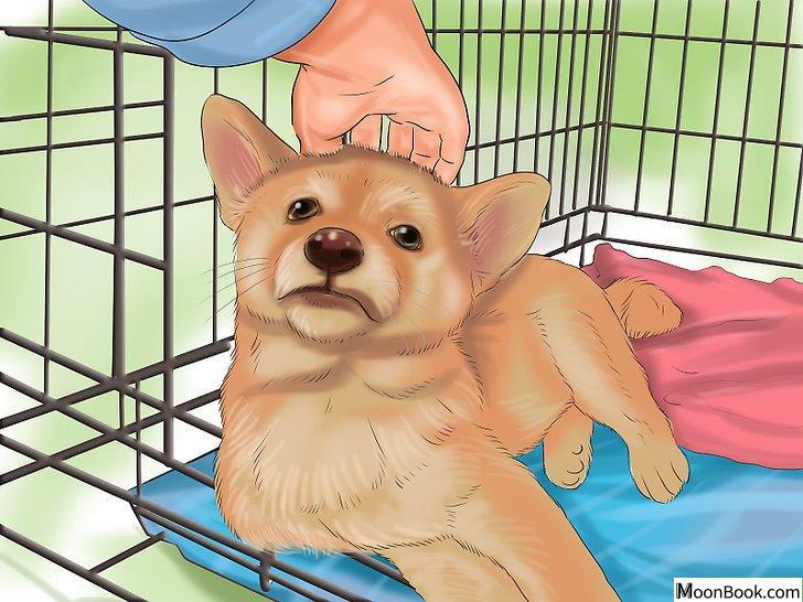 以Crate Train Your Dog or Puppy Step 31为标题的图片