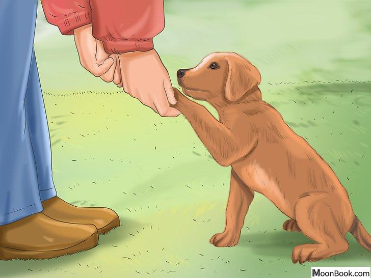 以Crate Train Your Dog or Puppy Step 32为标题的图片