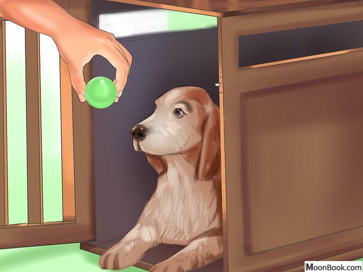以Crate Train Your Dog or Puppy Step 8为标题的图片