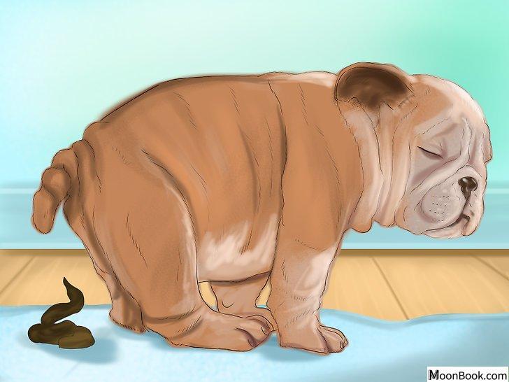 以Crate Train Your Dog or Puppy Step 9为标题的图片