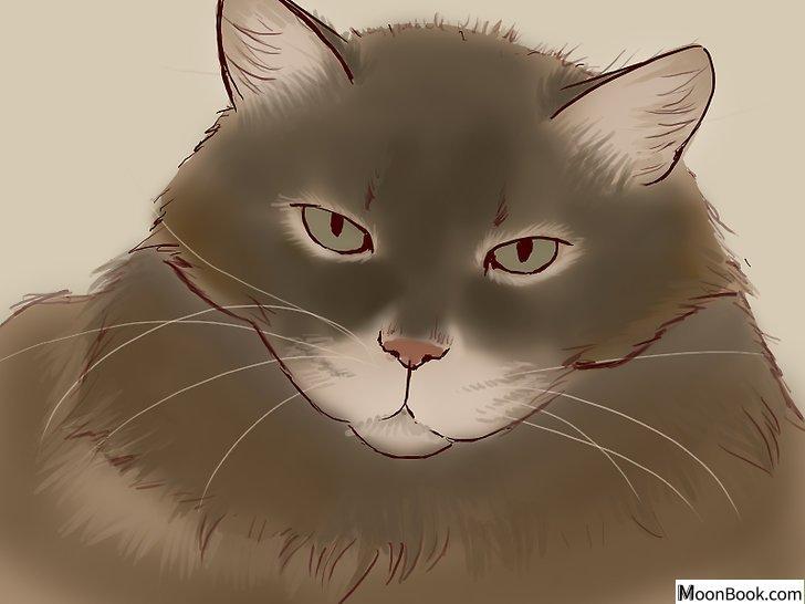 以Deal With a Cat Scratch Step 23为标题的图片