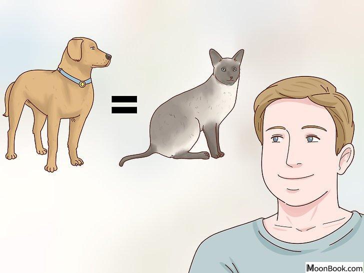 以Decide if a Siamese Cat Is Right for You Step 2为标题的图片