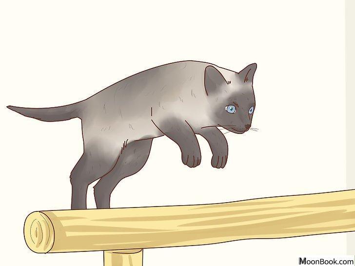以Decide if a Siamese Cat Is Right for You Step 4为标题的图片