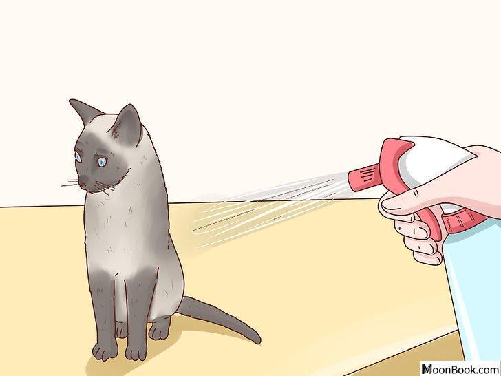 以Decide if a Siamese Cat Is Right for You Step 5为标题的图片