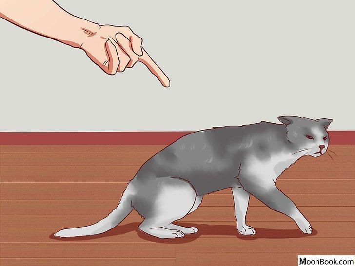 以Discipline Cats Step 15为标题的图片