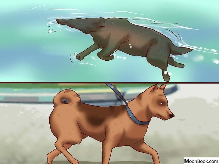 以Get Dogs to Gain a Healthy Weight Step 5为标题的图片