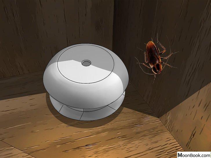 以Get Rid Of Roaches In an Apartment Step 1为标题的图片