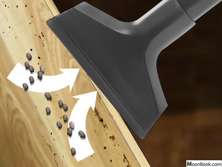以Get Rid Of Roaches In an Apartment Step 10为标题的图片