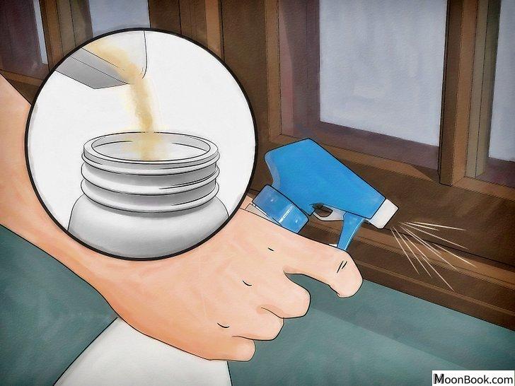 以Get Rid of Stink Bugs Naturally Step 2为标题的图片