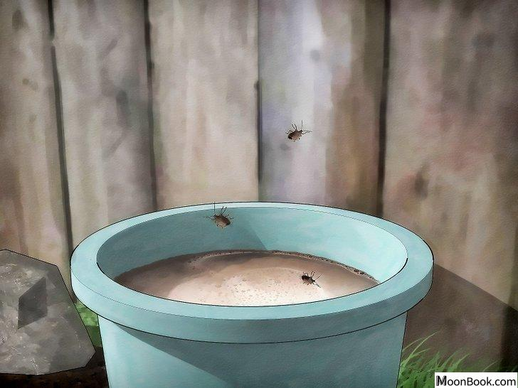 以Get Rid of Stink Bugs Naturally Step 8为标题的图片