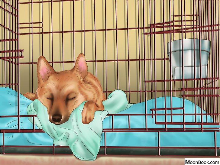 以Get Your Dog to Sleep Step 2为标题的图片